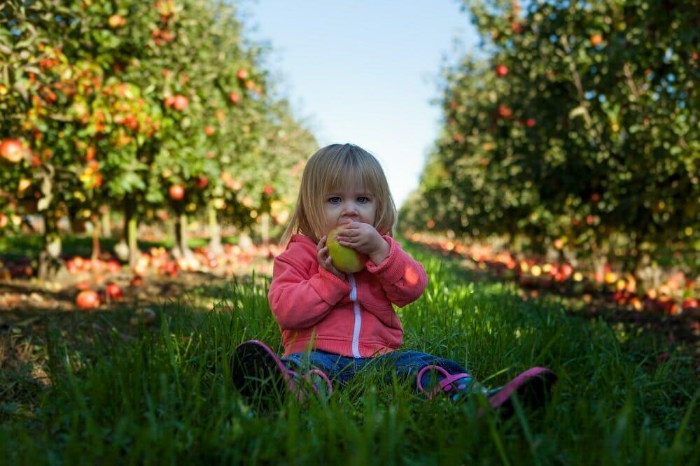 Criança sentada na grama em meio a pés de frutas de um pomar